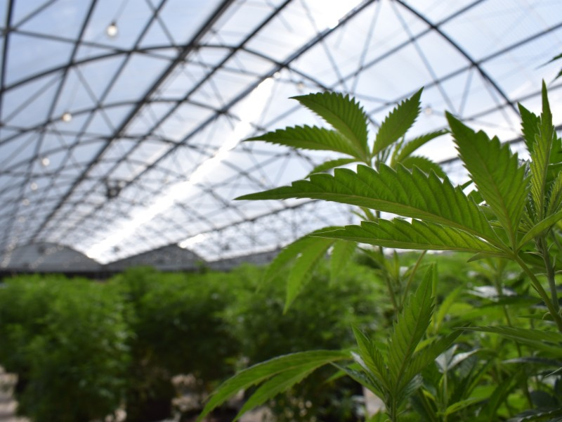 Since 2012 it is legal to grow marijuana seeds in Colorado
